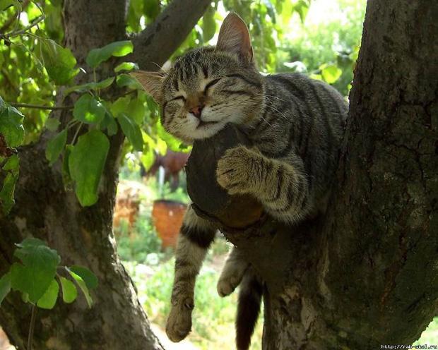 Bộ ảnh chứng minh nếu ngủ trên cây là nghệ thuật, thì bọn mèo là những nghệ sĩ đích thực - Ảnh 20.