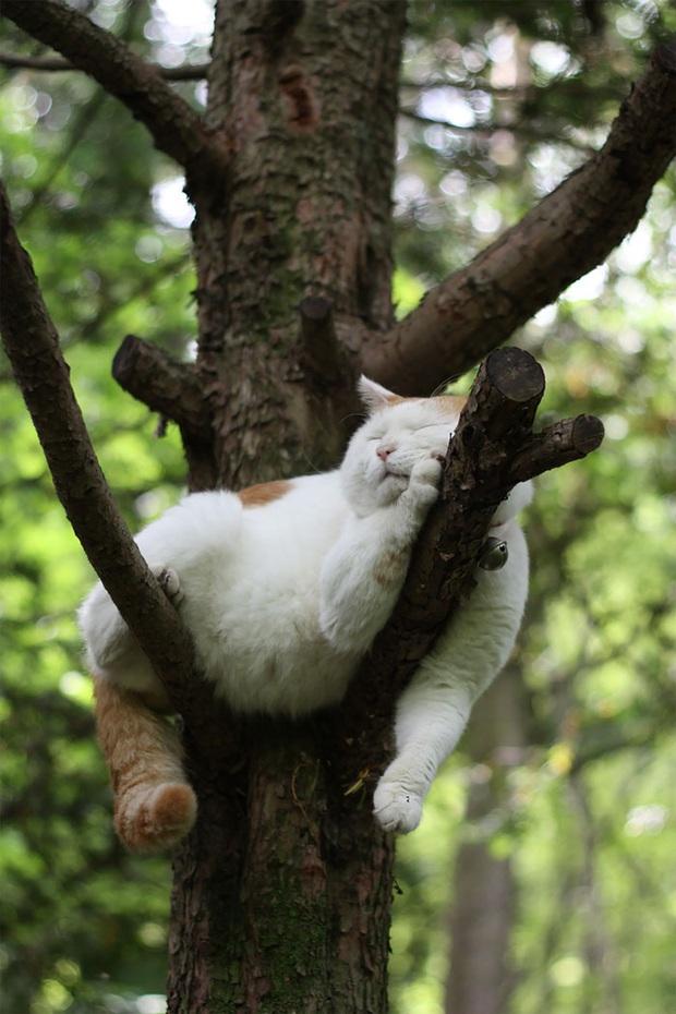 Bộ ảnh chứng minh nếu ngủ trên cây là nghệ thuật, thì bọn mèo là những nghệ sĩ đích thực - Ảnh 21.