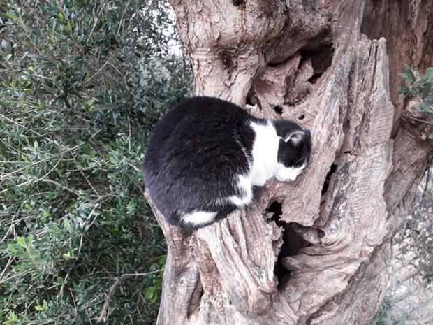 Bộ ảnh chứng minh nếu ngủ trên cây là nghệ thuật, thì bọn mèo là những nghệ sĩ đích thực - Ảnh 23.