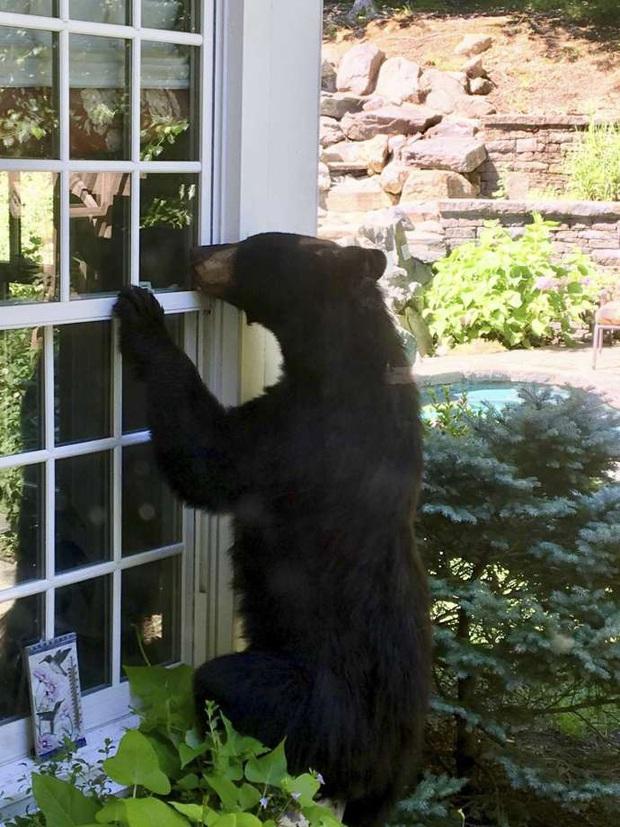 Cụ già 82 tuổi hỗn chiến với gấu hoang nặng 150kg: Bà đấm nó văng lên trời luôn - Ảnh 4.