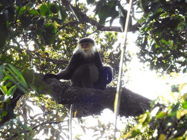 Phát hiện nhiều loài động vật cực kỳ quý hiếm ở Kon Tum - Ảnh 1.