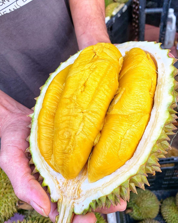 Tất tần tật thông tin về loại sầu riêng ngon nhất thế giới bán tại Việt Nam với giá 1,6 triệu/kg, dù đắt vẫn được giới sành ăn đổ mua - Ảnh 8.