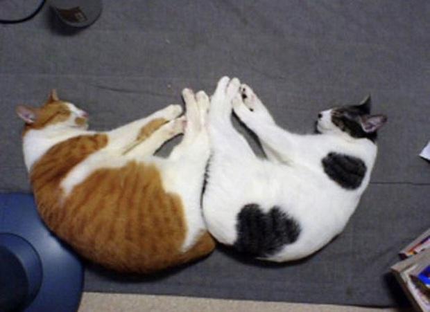 Cư dân mạng thi nhau khoe các kiểu dáng ngủ kém sang của đám mèo cưng - Ảnh 3.