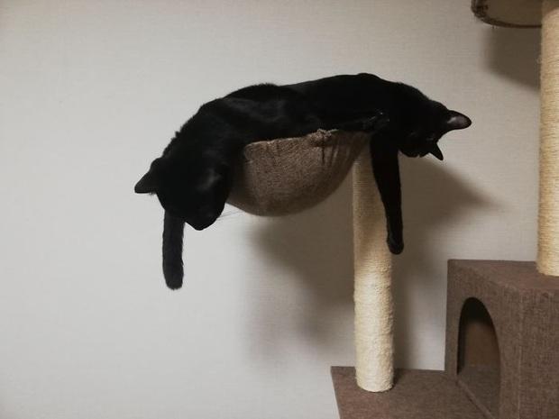 Cư dân mạng thi nhau khoe các kiểu dáng ngủ kém sang của đám mèo cưng - Ảnh 5.