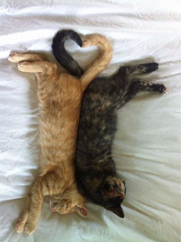 Cư dân mạng thi nhau khoe các kiểu dáng ngủ kém sang của đám mèo cưng - Ảnh 6.