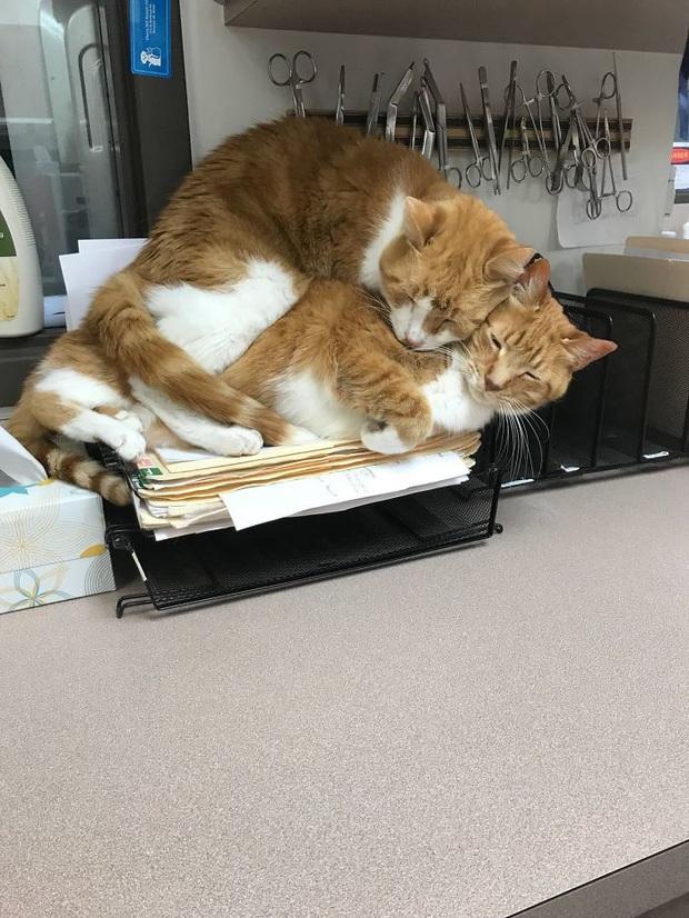 Cư dân mạng thi nhau khoe các kiểu dáng ngủ kém sang của đám mèo cưng - Ảnh 8.
