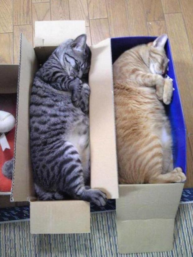 Cư dân mạng thi nhau khoe các kiểu dáng ngủ kém sang của đám mèo cưng - Ảnh 9.