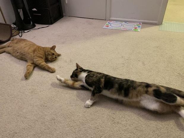 Cư dân mạng thi nhau khoe các kiểu dáng ngủ kém sang của đám mèo cưng - Ảnh 11.