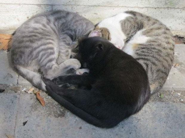 Cư dân mạng thi nhau khoe các kiểu dáng ngủ kém sang của đám mèo cưng - Ảnh 12.