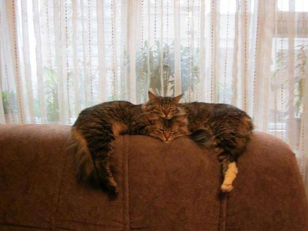 Cư dân mạng thi nhau khoe các kiểu dáng ngủ kém sang của đám mèo cưng - Ảnh 13.