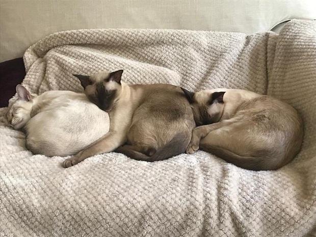 Cư dân mạng thi nhau khoe các kiểu dáng ngủ kém sang của đám mèo cưng - Ảnh 16.