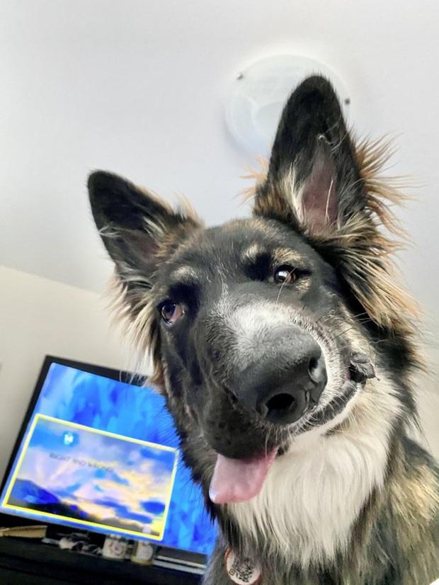 Chó mặt xếch vừa thương vừa buồn cười trở thành bác sĩ tâm lý cho động vật khuyết tật - Ảnh 1.