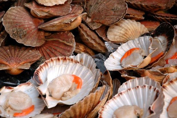 Thứ màu đen trong hải sản như tôm, ngao, hàu, sò, trai chúng ta trước giờ vẫn tưởng chất bẩn thực ra không phải phân, nó là gì? - Ảnh 3.