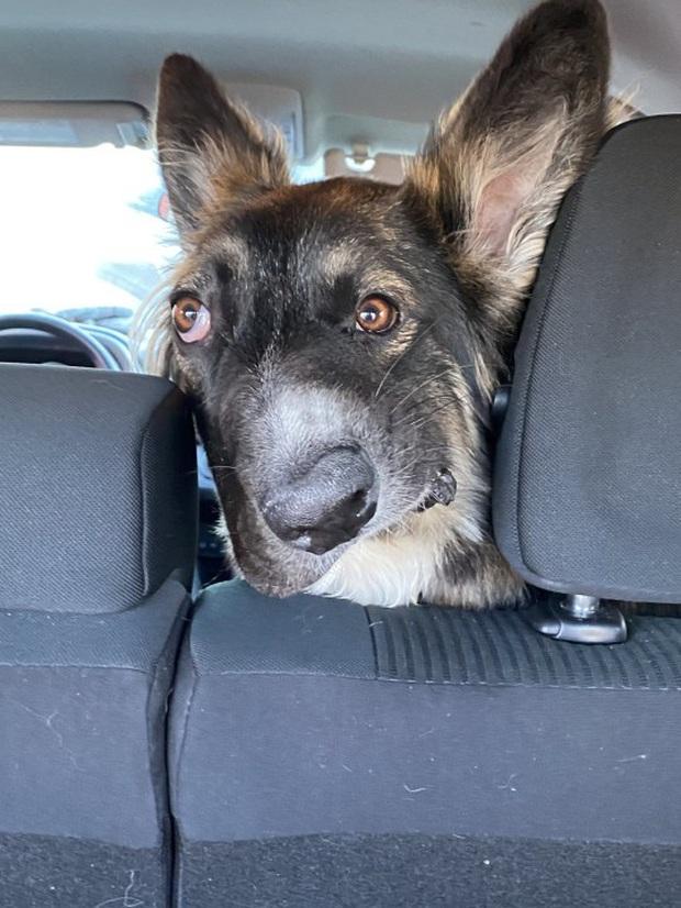 Chó mặt xếch vừa thương vừa buồn cười trở thành bác sĩ tâm lý cho động vật khuyết tật - Ảnh 4.