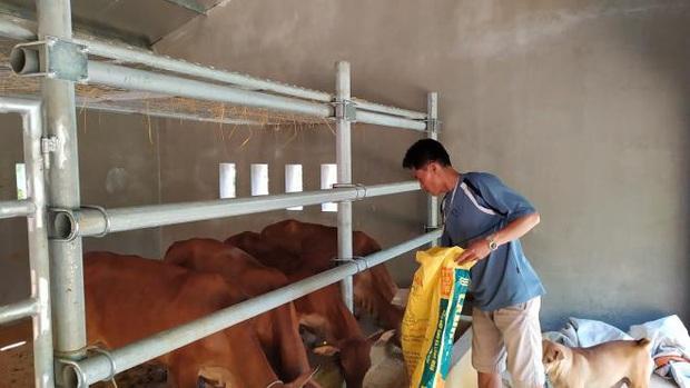 """Xôn xao 67 chuồng bò """"hạng sang"""" ở Nghệ An được xây với giá… gần 13 tỷ đồng bên cạnh ngôi nhà dột nát của người dân - Ảnh 2."""