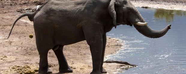 Động vật có vú nào cũng mất tầm 12 giây để đi vệ sinh - nghiên cứu khoa học chứng minh định lý thô nhưng thật - Ảnh 1.