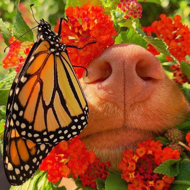 Gặp gỡ chú chó siêu yêu chơi thân với tất cả bươm bướm trong vườn - Ảnh 2.