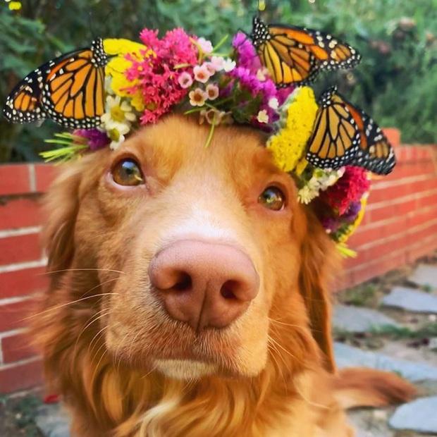 Gặp gỡ chú chó siêu yêu chơi thân với tất cả bươm bướm trong vườn - Ảnh 3.