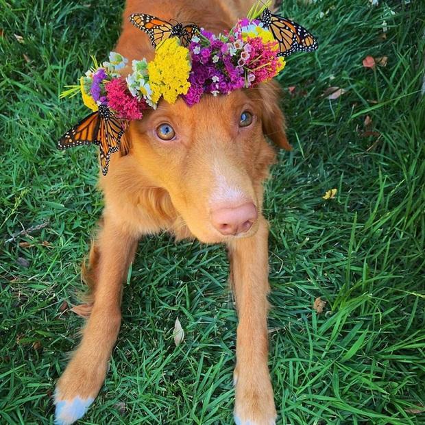 Gặp gỡ chú chó siêu yêu chơi thân với tất cả bươm bướm trong vườn - Ảnh 6.