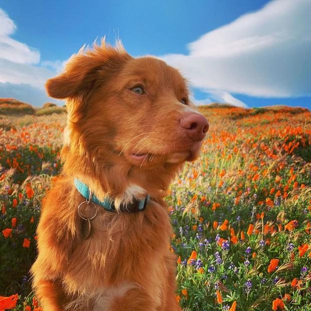 Gặp gỡ chú chó siêu yêu chơi thân với tất cả bươm bướm trong vườn - Ảnh 7.