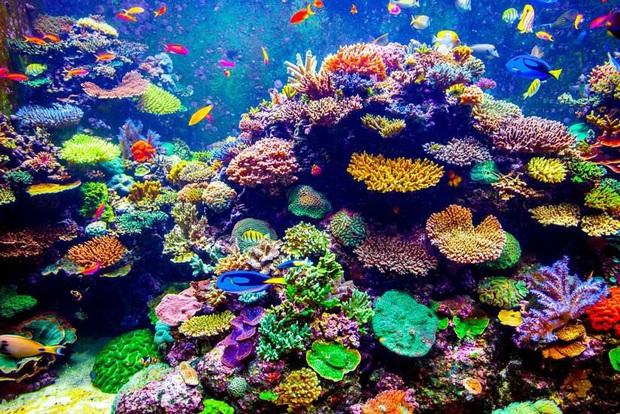 Ai bảo chỉ xả rác mới huỷ hoại môi trường biển, những hành vi vô ý này của du khách cũng có thể khiến đại dương kêu cứu - Ảnh 2.