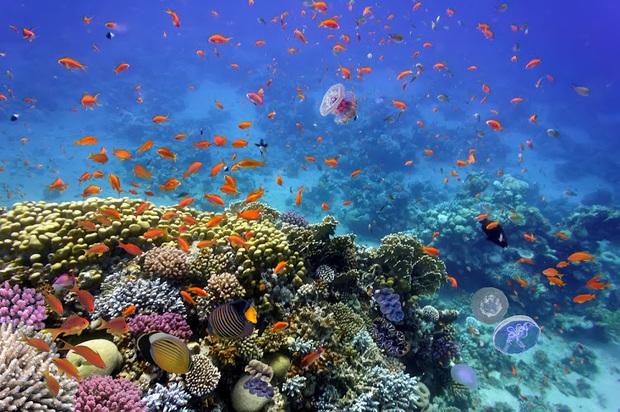 Ai bảo chỉ xả rác mới huỷ hoại môi trường biển, những hành vi vô ý này của du khách cũng có thể khiến đại dương kêu cứu - Ảnh 1.