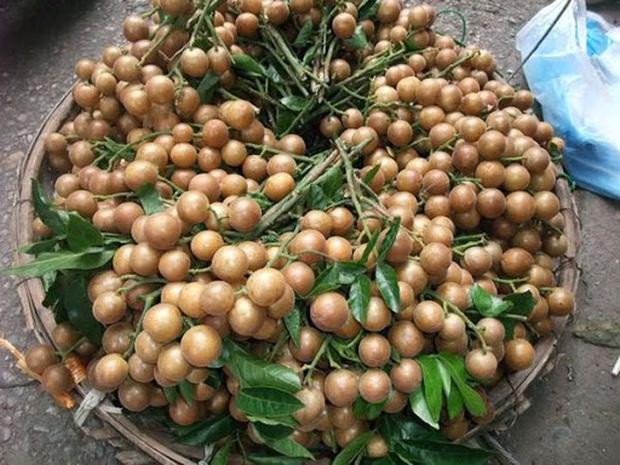 """Lần đầu thấy quất hồng bì ở Việt Nam, cô bạn nước ngoài lo lắng hỏi """"Ăn vào có chết không?"""" khiến ai cũng phì cười - Ảnh 2."""