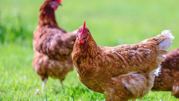 Chuyện về người phụ nữ mắc căn bệnh siêu hiếm: Tưởng mình là một con gà  - Ảnh 1.
