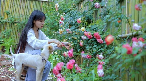 """Ngay tại Trung Quốc đã có loạt vlogger phong cách na ná Lý Tử Thất, có người còn gần như """"copy"""" nguyên si - Ảnh 3."""