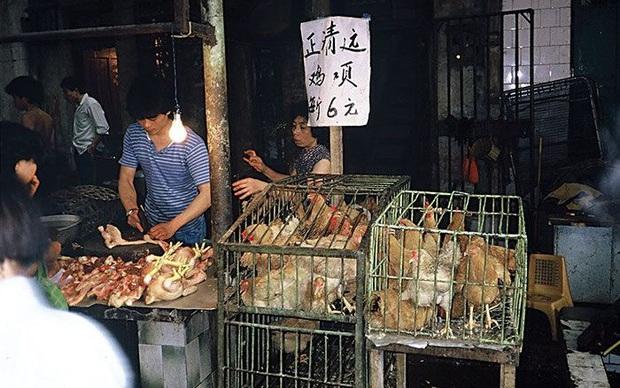 Trung Quốc từng bước xóa bỏ giao dịch, giết mổ gia cầm sống tại các chợ - Ảnh 1.
