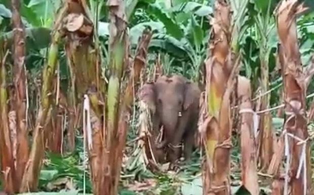 Đàn voi rừng quậy phá khu dân cư Đồng Nai bất chấp hàng rào điện - Ảnh 1.
