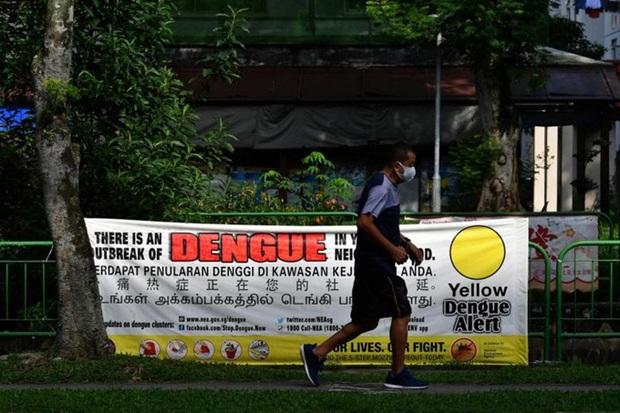 Singapore vượt ngưỡng hơn 14.000 người bị sốt xuất huyết - Ảnh 1.