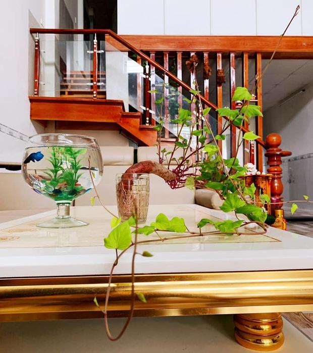 Hè này muốn đu trend chơi bonsai, tốn tiền mua cây làm gì khi tất cả bạn cần chỉ là một củ khoai lang - Ảnh 15.