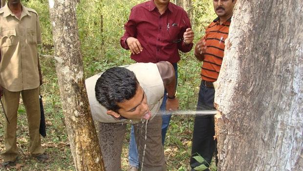 Video: Nước bắn tung toé từ thân cây như vòi mở van tại Ấn Độ gây sốt MXH - Ảnh 3.