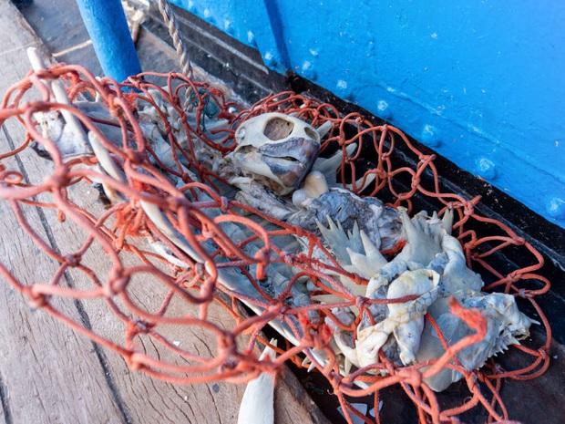 100 tấn rác cùng phát hiện đau lòng trong đợt thu dọn đại dương lớn nhất lịch sử: Con người đã đối xử quá tàn nhẫn với Trái đất rồi - Ảnh 4.
