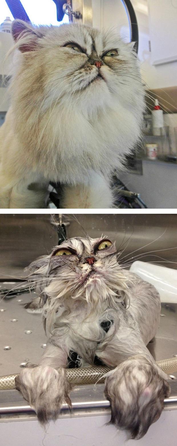 Cười vỡ bụng với loạt ảnh hậu trường khi đi tắm của dàn thú cưng, đáng yêu cỡ thiên thần cũng hóa thành ác quỷ trong chốc lát - Ảnh 1.