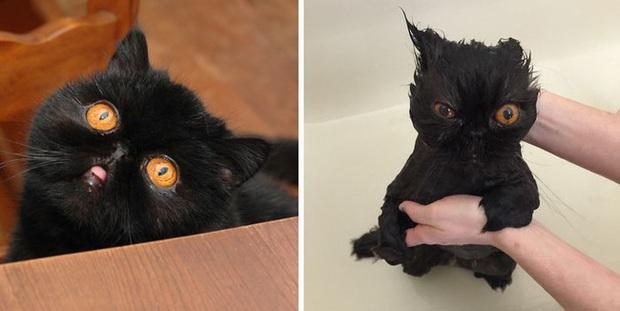 Cười vỡ bụng với loạt ảnh hậu trường khi đi tắm của dàn thú cưng, đáng yêu cỡ thiên thần cũng hóa thành ác quỷ trong chốc lát - Ảnh 3.