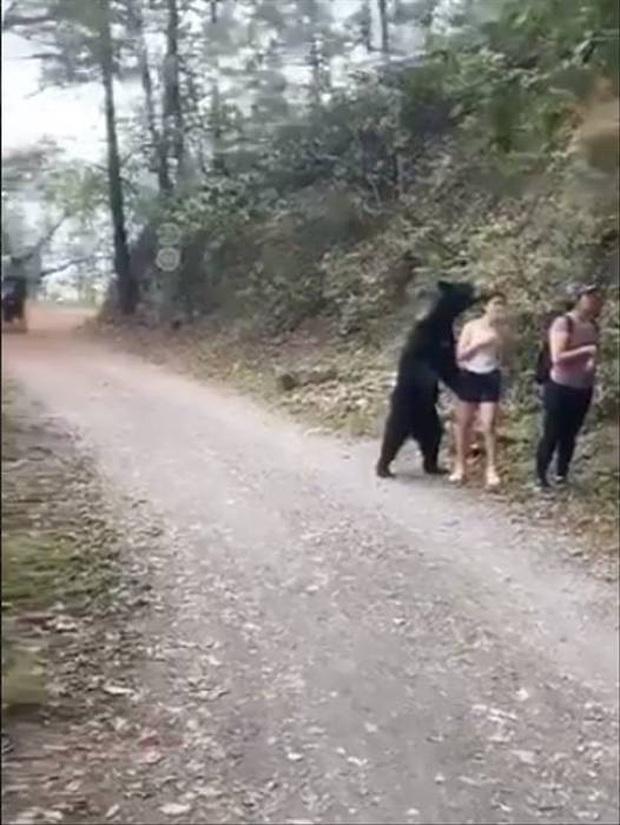 Gấu đen bị thiến sau khi vô tư đụng chạm nữ du khách trẻ - Ảnh 3.