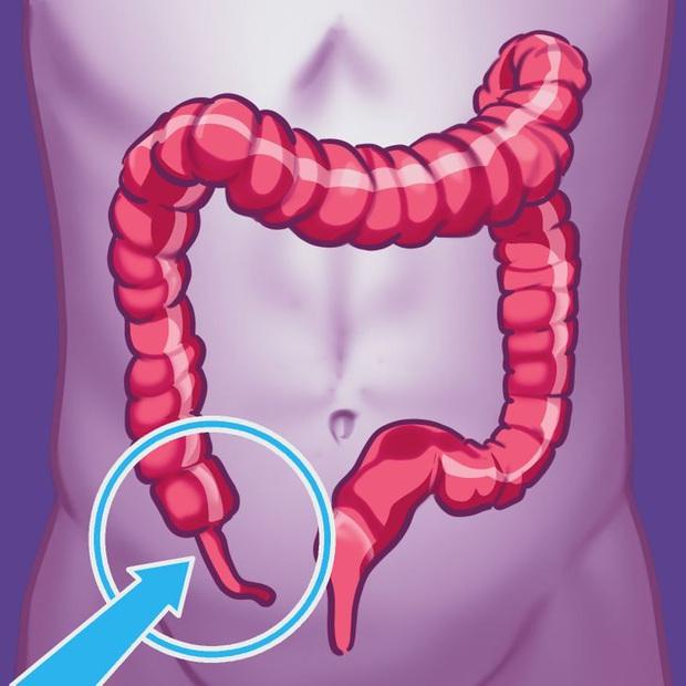 9 bộ phận vô dụng đến thảm thương trên cơ thể chúng ta, nhưng lại là bảo chứng sinh tồn của quá trình tiến hóa - Ảnh 2.