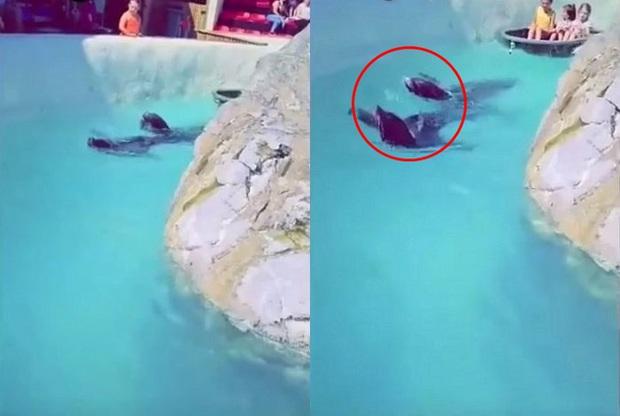 Đoạn clip quay 2 chú hải cẩu bơi quanh hồ nhưng món đồ trên cổ chúng lại gây chú ý và khiến hàng nghìn dân mạng nóng máu - Ảnh 3.