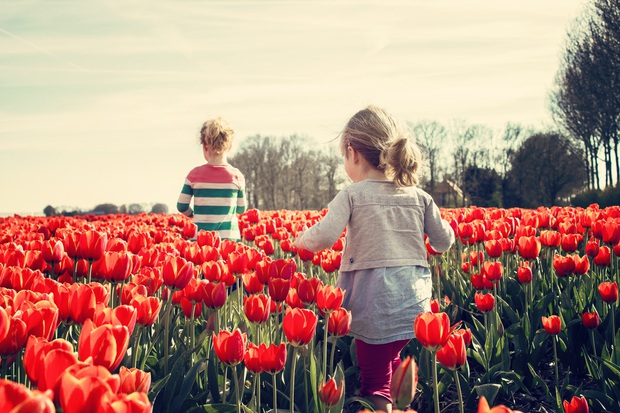 Hà Lan không như tưởng tượng: Những điều không thể giải thích tại Xứ sở hoa Tulip, theo tâm sự của người nước ngoài đến sinh sống lâu năm - Ảnh 1.
