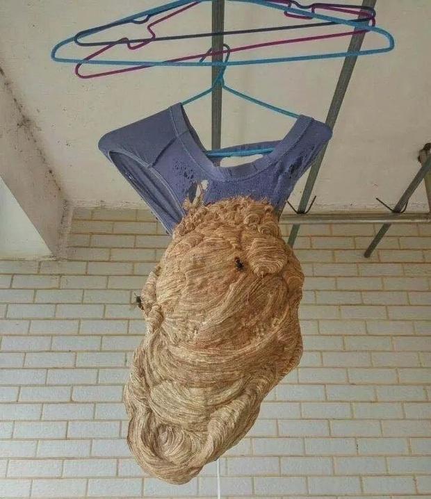 Ám ảnh khung cảnh bẩn thỉu bên trong ký túc xá sau mùa dịch: Chuột làm thành tổ, cây mọc dài hàng mét - Ảnh 6.