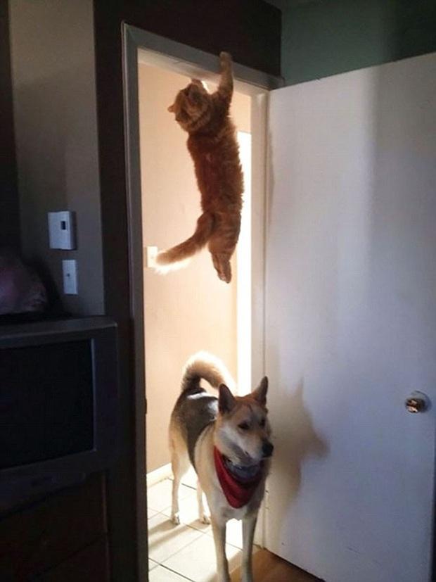 Những kiểu tư thế thách thức mọi định luật vật lý của mèo cưng - Ảnh 2.