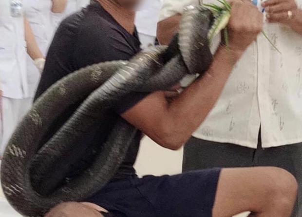 Tây Ninh: Người đàn ông 38 tuổi nguy kịch vì rắn hổ chúa cắn vào đùi, tay vẫn cầm đầu rắn khi vào viện - Ảnh 1.