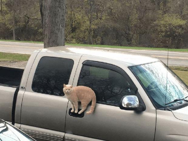 Những kiểu tư thế thách thức mọi định luật vật lý của mèo cưng - Ảnh 4.