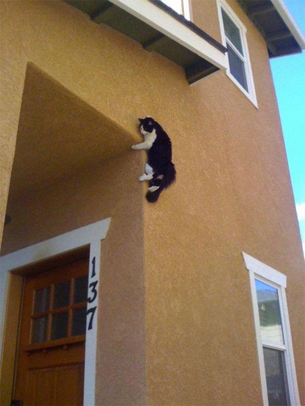 Những kiểu tư thế thách thức mọi định luật vật lý của mèo cưng - Ảnh 5.