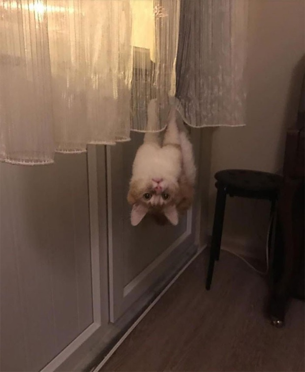 Những kiểu tư thế thách thức mọi định luật vật lý của mèo cưng - Ảnh 6.