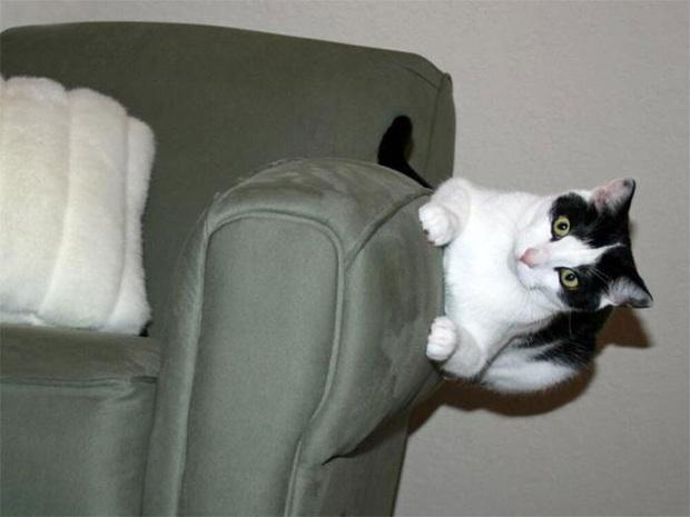 Những kiểu tư thế thách thức mọi định luật vật lý của mèo cưng - Ảnh 8.