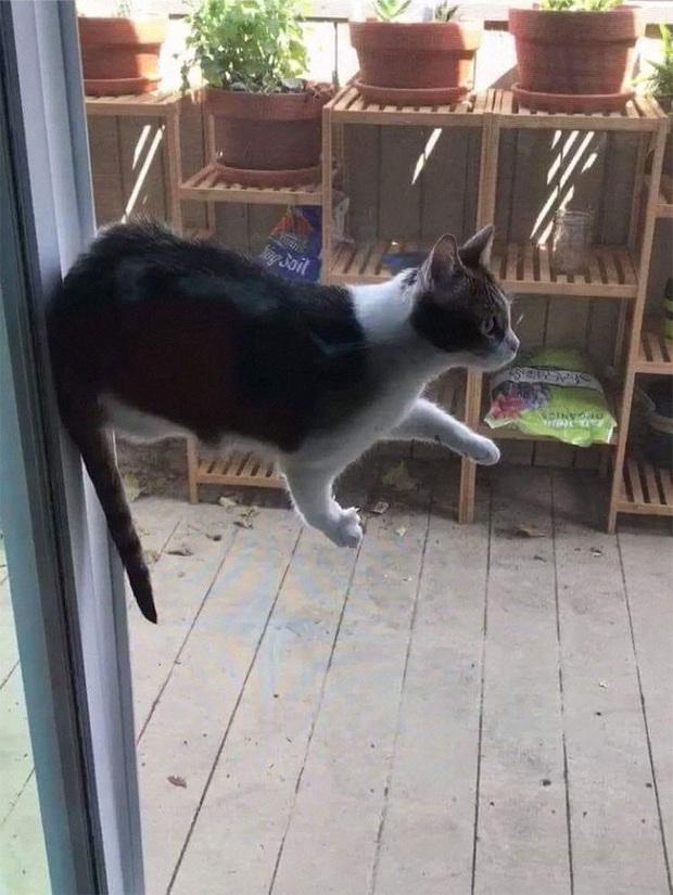 Những kiểu tư thế thách thức mọi định luật vật lý của mèo cưng - Ảnh 10.