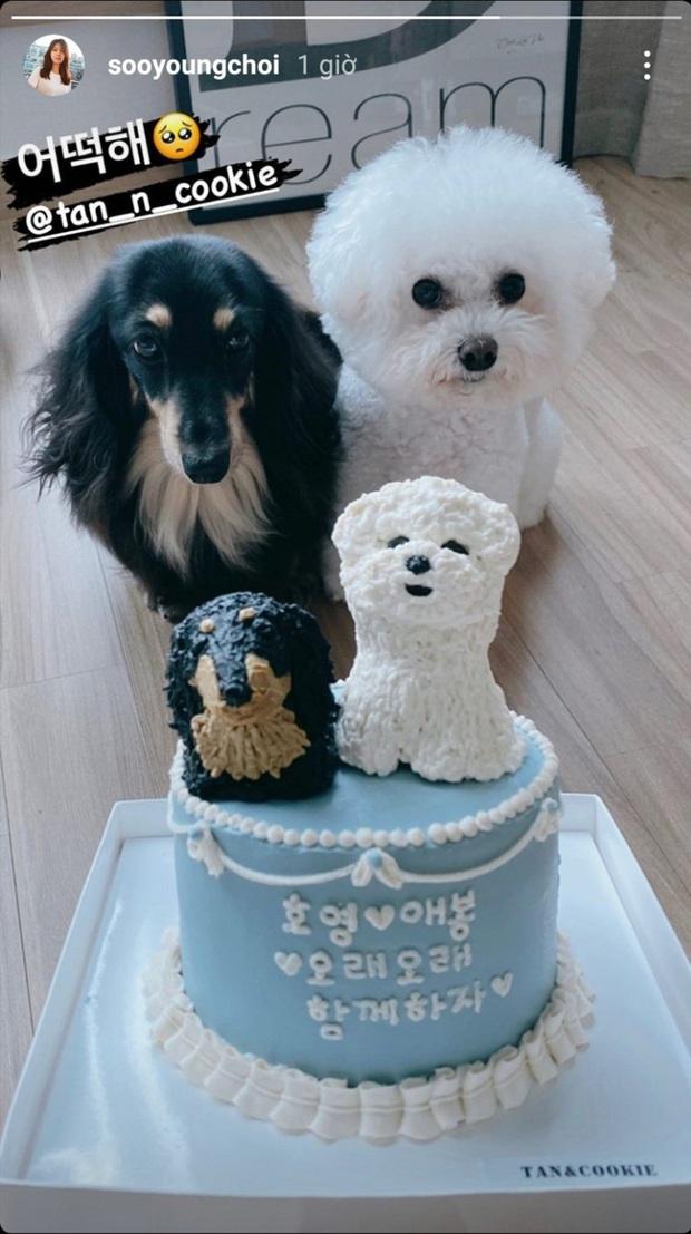 Knet soi ra chi tiết cho thấy mối quan hệ hiện tại của Sooyoung và tài tử Jung Kyung Ho sau 8 năm hẹn hò - Ảnh 3.